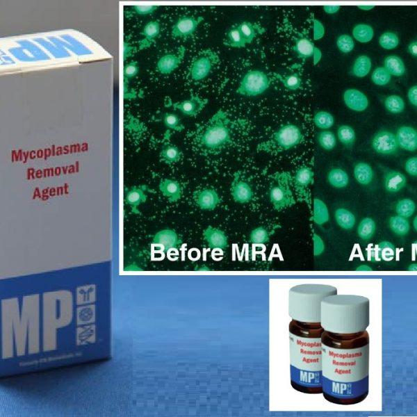 MRA AGENTE REMOVEDOR MICOPLASMA econolab(50 UG/ML), 093050044 MPBio oferece uma solução eficaz para contaminação por micoplasma em culturas de células