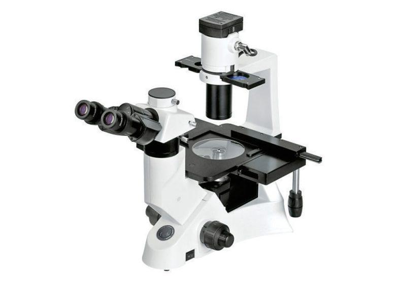 Microscópio Invertido bel